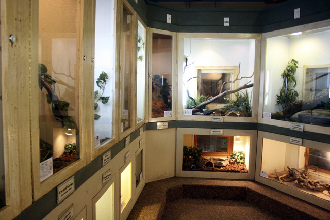 awesome reptile room