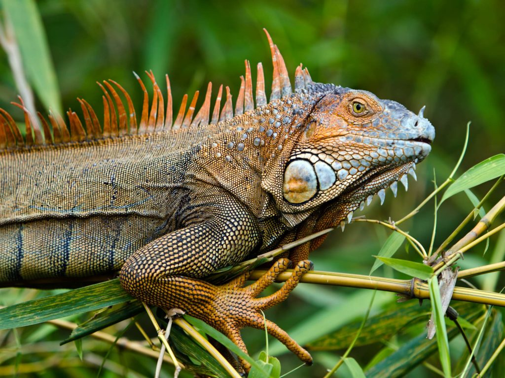 What To Get At The Reptile Expo