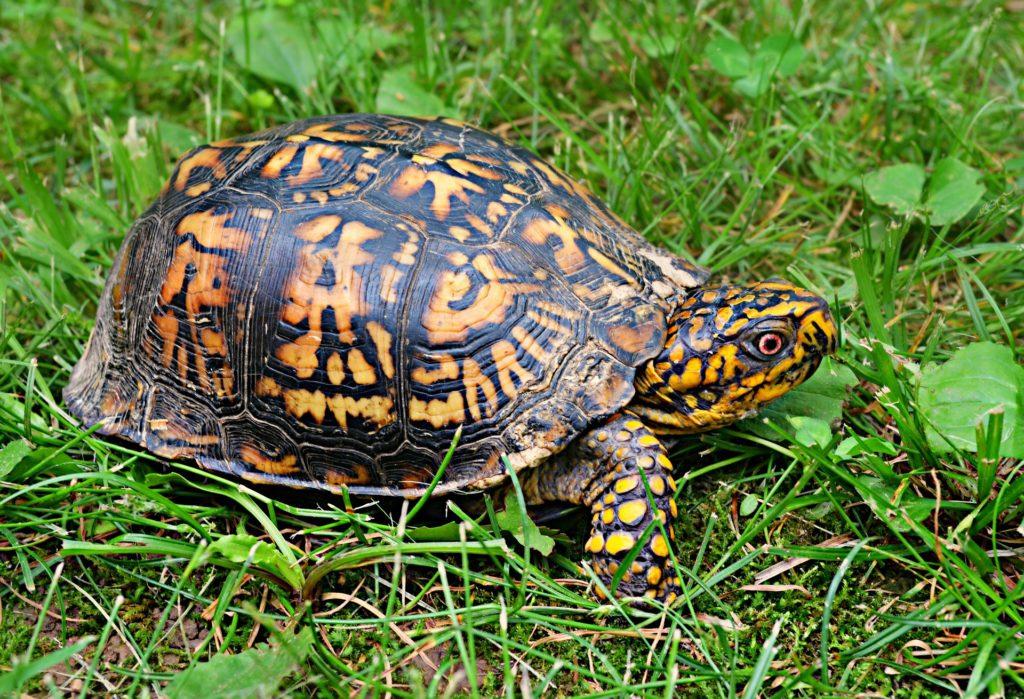R Turtles Good Pets Do Turtles Make Good P...